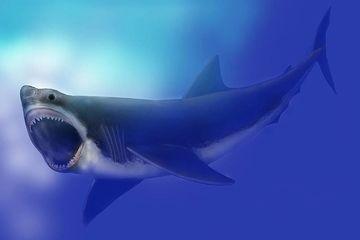 Download 900 Gambar Ikan Hiu Vs Paus HD Terbaru