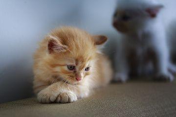 Berita Perilaku Kucing Terbaru Hari Ini Bobo