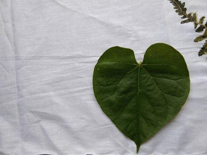 Yuk Coba Ecoprint Kegiatan Kreatif Yang Menghasilkan