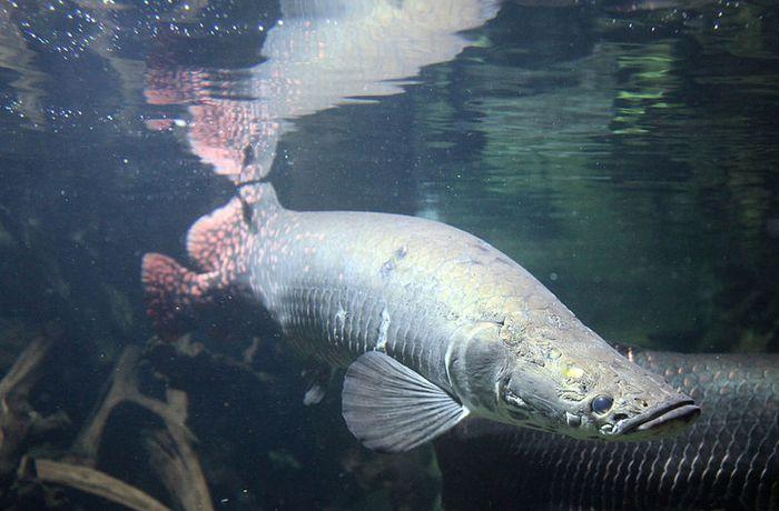37+ Hewan predator hutan amazon terupdate