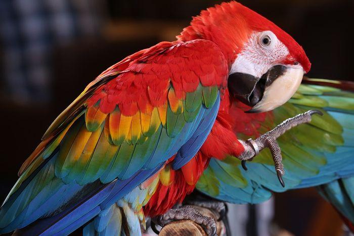 Download 700+  Gambar Burung Yang Cantik Di Dunia HD Paling Bagus Gratis