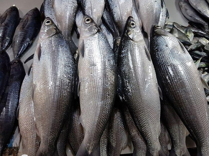 Baik Untuk Kesehatan Ini Dia 10 Jenis Ikan Laut Yang Bisa Dimakan Semua Halaman Bobo