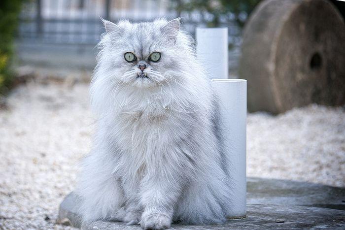 Ini Dia 5 Warna Bulu Kucing Yang Jarang Ada Apakah Kucingmu Termasuk Semua Halaman Bobo