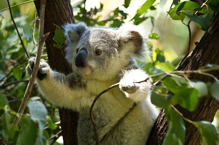 500+ Gambar Hewan Di Australia Terbaru
