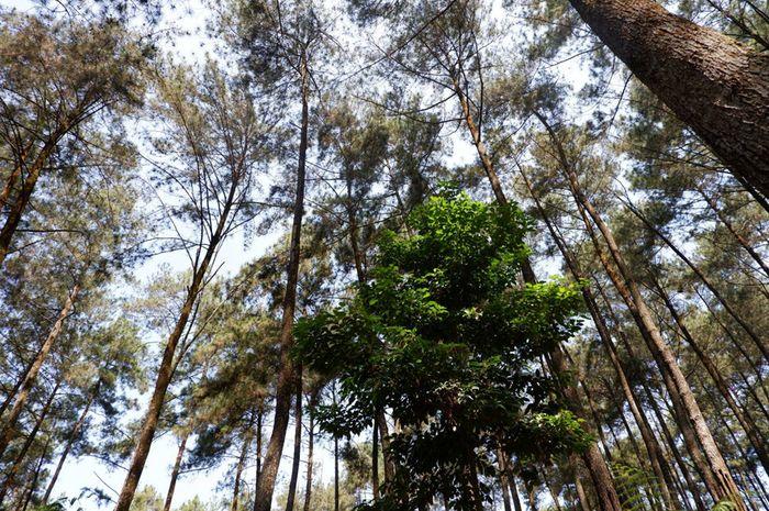 8 Ekosistem Utama Yang Ada Di Bumi Dan Contoh Hewan Di Dalamnya