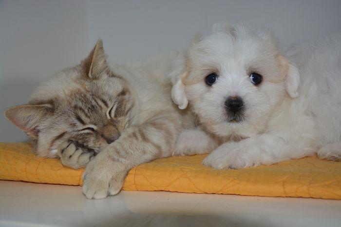Download 87+  Gambar Kucing Melas Paling Imut Gratis