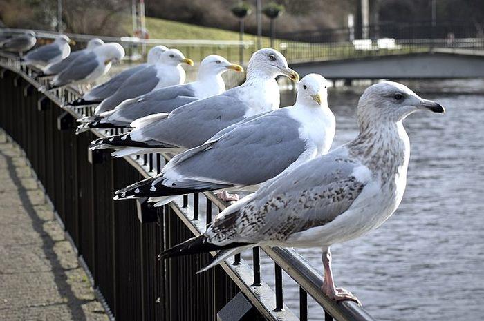 Inilah 5 Jenis Burung Paling Berbahaya Di Dunia Pernah Melihatnya Semua Halaman Bobo