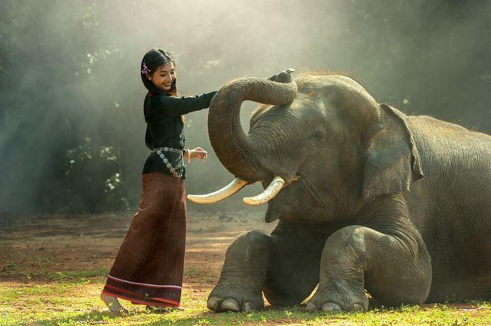 108 Gambar Hewan Gajah Putih Gratis