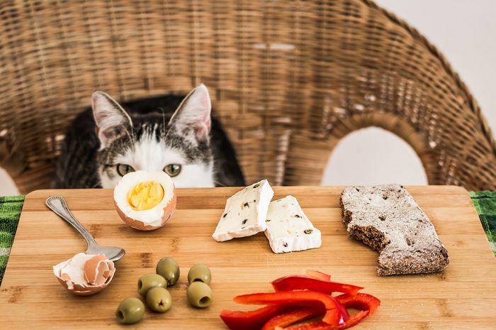 Download 93+  Gambar Kartun Anak Memberi Makan Kucing Paling Keren HD