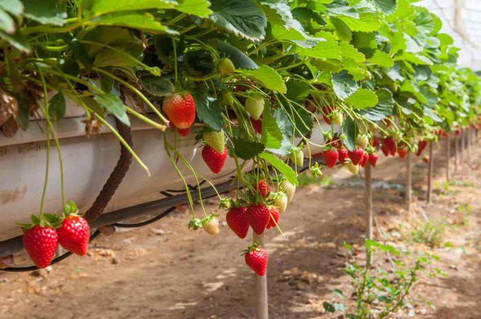 Mengenal 2 Cara Perkembangbiakan Tumbuhan Vegetatif Dan Generatif Semua Halaman Bobo