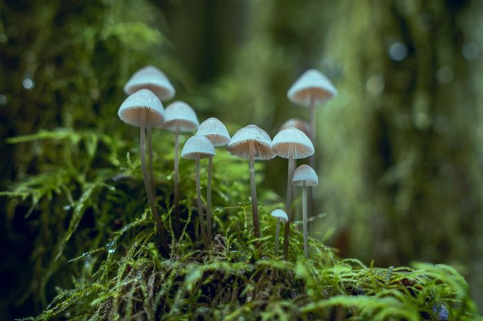 Spora Beserta Contohnya Cara Perkembangan Vegetatif Alami Pada Tumbuhan Semua Halaman Bobo