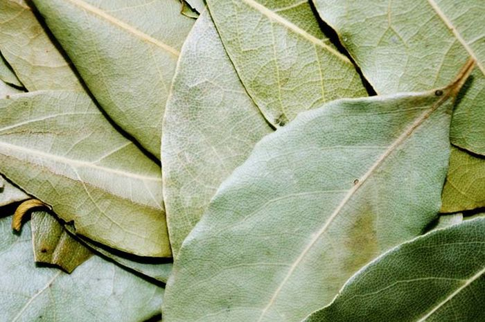 The benefits of drinking bay leaf boiled water.