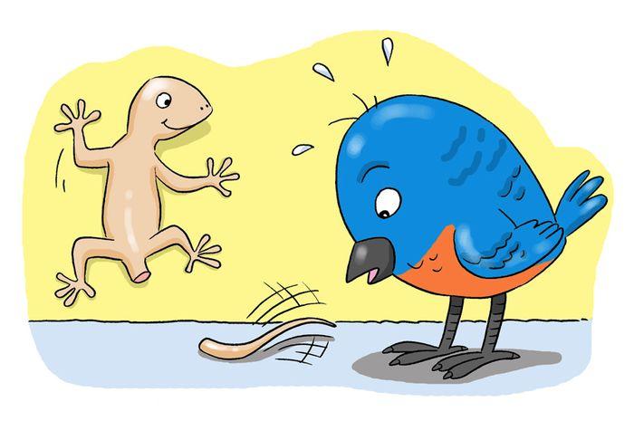 Kenapa Ekor Cicak Yang Putus Tetap Bergerak Bobogridid