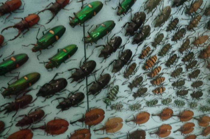 42+ Hewan serangga terbaru