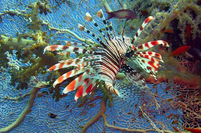 106 Gambar Hewan Laut Gratis Terbaik