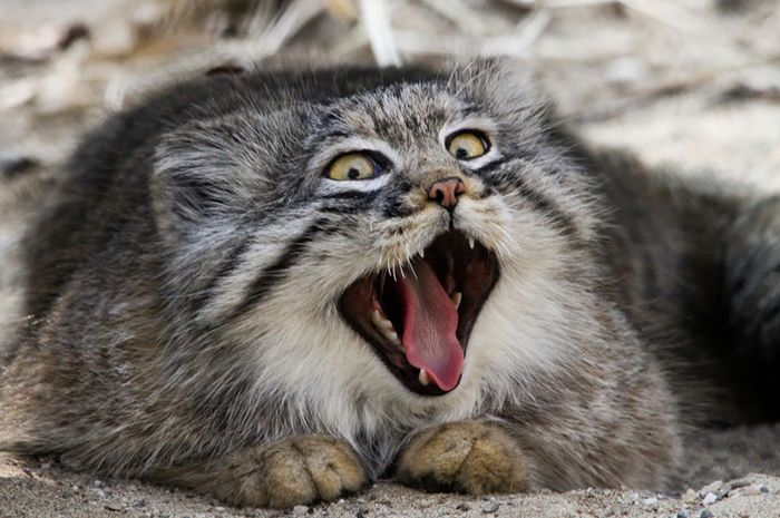 Download 100+  Gambar Kartun Kucing Bertanduk Lucu Gratis