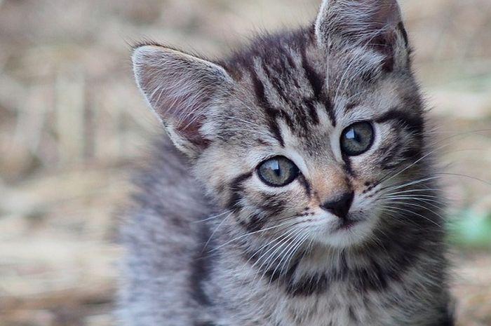 Download 93+  Gambar Kucing Jatuh Paling Bagus Gratis
