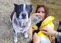 Momen Penuh Emosional, Kisah Anjing Cacat yang Setia dan Menolong Gadis Berusia 3 Tahun