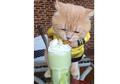 6 Potret Gemes Chó, Si Kucing  Lucu Berkostum yang Jadi Selebgram