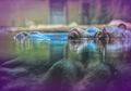 Terlalu Sering Buang Air Besar, Tinja Kuda Nil Bunuh Banyak Ikan