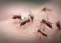 Memberantas Demam Berdarah Dengue dengan 'Memandulkan' Nyamuk