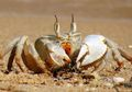 Tak Hanya Menyamping, Ada Juga Kepiting yang Jalannya Mundur
