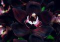 Bunga Indah Berharga Ratusan Juta Ini Tumbuh di Indonesia, lo!