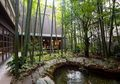 Serasa Berada di Pedesaan, Ini Cara Membuat Taman Tropis di Rumah