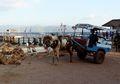 Cidomo, Transportasi Ramah Lingkungan yang Berasal Dari Lombok