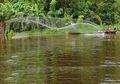 Musim Kemarau di Danau Sentarum, Waktunya Menangkap Ikan yang Banyak