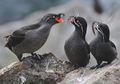 Unik, Burung Jantan Ini Tiba-tiba Beraroma Jeruk saat Memikat Pasangannya
