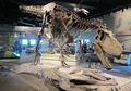 Bagi Kamu Pecinta Dinosaurus, Coba Kunjungi 10 Museum Dinosaurus Ini