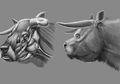 Yuk, Temui Spesies Sapi Berkepala 'Bulldog' yang Telah Punah Ini, Anatominya Unik!