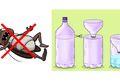 5 Bahan Ajaib Ampuh Bikin Kecoa Minggat dari Rumah, Ini Caranya!