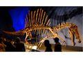 Spinosaurus, Pemburu yang Ukuran Tubuhnya Lebih Besar dari T-rex