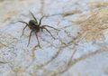 Perubahan Iklim Membuat Laba-laba Menjadi Lebih Besar, Apa Dampaknya?