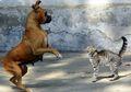 Benarkah Kucing dan Anjing Sering Berkelahi Seperti Kata Peribahasa?