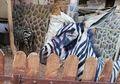Seekor Keledai 'Dipaksa' Menjadi Zebra di Sebuah Kebun Binatang, Caranya Konyol Sekaligus Miris