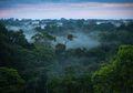 Hilang Selama 3 Hari di Hutan, Bocah Berusia 2 Tahun Ini Ditemukan Selamat