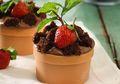 Wah, Seru Sekali Membuat Flower Choco Mousse Cake Bersama Keluarga!