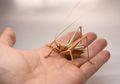 Seniman Ini Buat Replika Serangga yang Mirip Banget Cuma dari Bambu