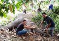 Menyedihkan, Seekor Gajah Ditemukan Mati dengan Belalai Terbakar