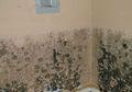 Dinding Lembab dan Berjamur Saat Musim Hujan, Ini Cara Mengatasinya!