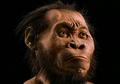 Sebuah Kisah dari Homo Erectus, Nenek Moyang Manusia yang Misterius