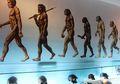Males Gerak Ternyata Bikin Manusia Purba Alami Kepunahan Zaman