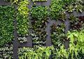 """Ajaib! Hawa Panas Langsung Terminimalisir Hanya dengan """"Green Wall"""""""