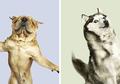Anjing dan Kucing Bisa 'Terbang', Apakah Itu Mungkin Terjadi?