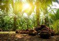 Mengembalikan Fungsi Hutan, Lahan Kelapa Sawit di TNGL Dimusnahkan