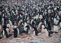 Kuburan Massal Penguin di Antartika Ini Ungkap Bahaya Perubahan Iklim