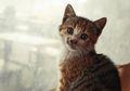 Mengapa Kucing Dijuluki Sebagai Hewan yang Memiliki Sembilan Nyawa?